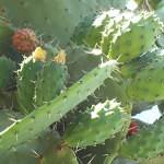 Cactus Plant_fin