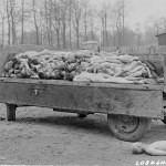 Buchenwald_corpse_trailer_ww2-181