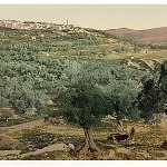 General-view_-Samaria_-Holy-Land_-_i.e._-Sabastiyah_-Israel_