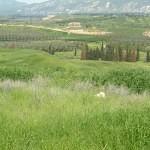 israel18 041 150x150 Фото Израиля, часть 18   Иерихон, Иордан, Гора Блаженств, Храм Гроба Господня   торрент