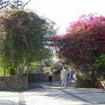 israel18 110 150x150 Фото Израиля, часть 18   Иерихон, Иордан, Гора Блаженств, Храм Гроба Господня   торрент