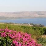 israel18 127 150x150 Фото Израиля, часть 18   Иерихон, Иордан, Гора Блаженств, Храм Гроба Господня   торрент