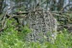 Старое еврейское кладбище в Печере (Винницкая область, Украина)