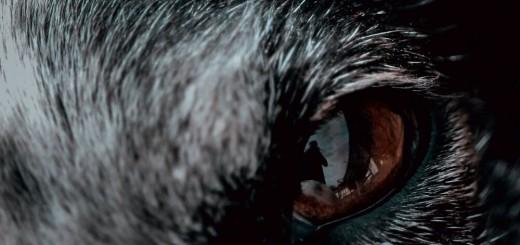 Shlomi Kendel - Lone Wolf (2019)